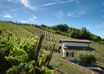 Vini Bio dell'Oltrepò Pavese