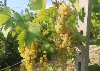 Fradé Chardonnay
